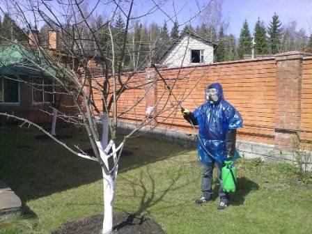 Обработка деревьев на даче помповым опрыскивателем