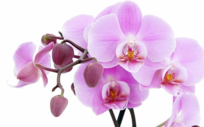 Растения нуждаются в питательной почве и очень активно употребляют полезные вещества, необходимые для роста и цветения