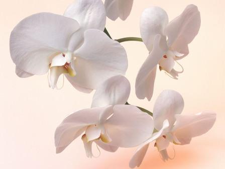 Наиболее правильно будет обеспечивать цветок подкормками во время каждого второго-третьего полива