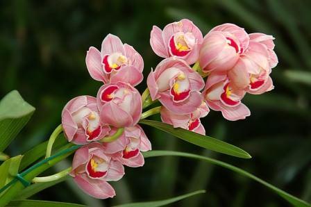 Орхидеи очень требовательны к освещению, а потому, если вы обеспечите максимально светлый день и небольшой досвет в зимнее время
