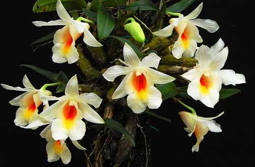Выращиваем орхидеи самостоятельно