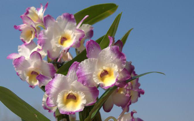 Основное отличие цветка любого вида орхидеи состоит в уникальном и абсолютно неповторимом его строении