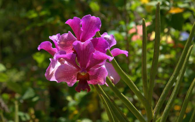 Орхидеи – красивые цветы, но они достаточно требовательны в уходе