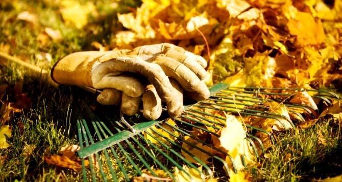 Сухие листья можно использовать в качестве утепления корневой системы деревьев