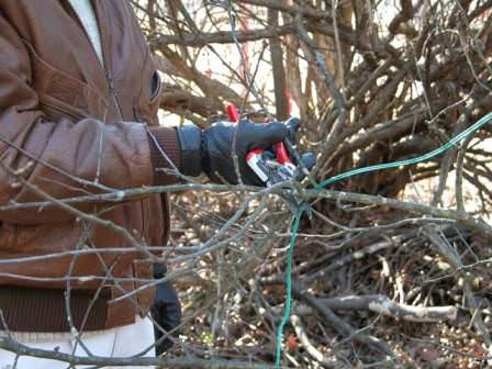 Осенью убирать с деревьев рекомендуется только сухие и сломанные ветки