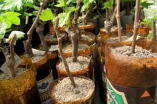 Всегда выбирайте только качественный посадочный материал для сада и огорода!