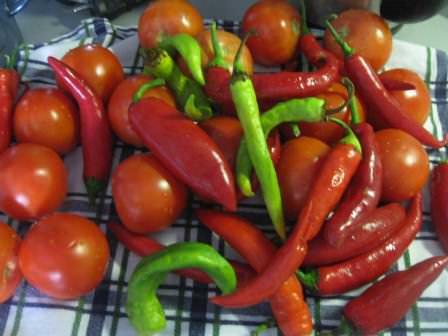 Правильно выбирая подкормки для острого перца чили, у вас есть все шансы на получение отличного урожая