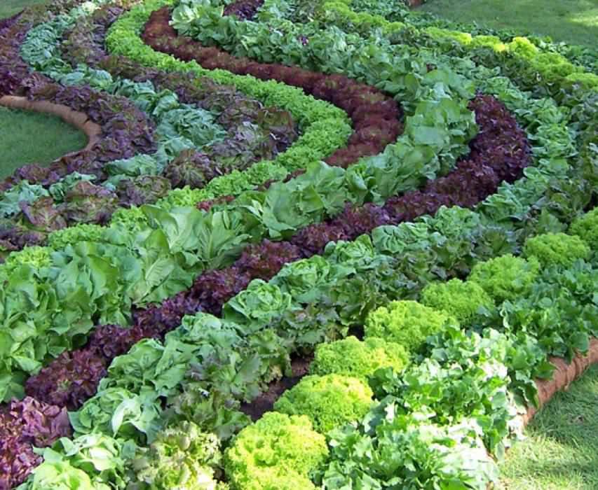 Для лечения и профилактики рекомендовано выращивать овощи своими руками, а если и покупать, то только в России или странах СНГ