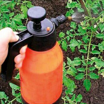 Не забывайте производить обработку и опрыскивание кустов помидор