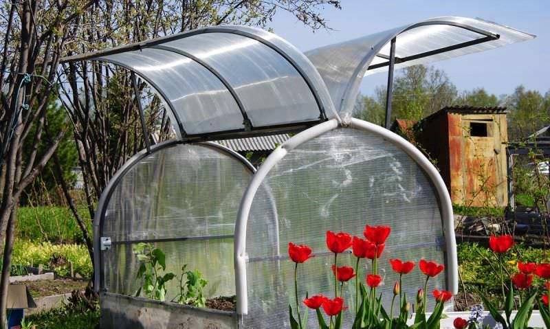Теплый микроклимат в парнике позволить начинать высадки весной на пару недель раньше, осенью же еще не собранный урожай будет защищен от ранних холодов