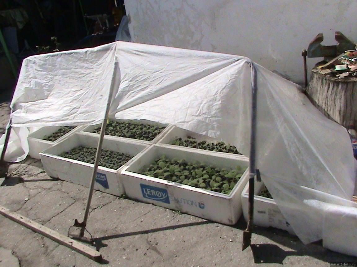 Простейший парник для выращивания рассады на даче, который мы построили самостоятельно