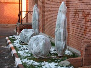 Не секрет, что зимы у нас бывают суровые, и некоторые растения нуждаются в защите