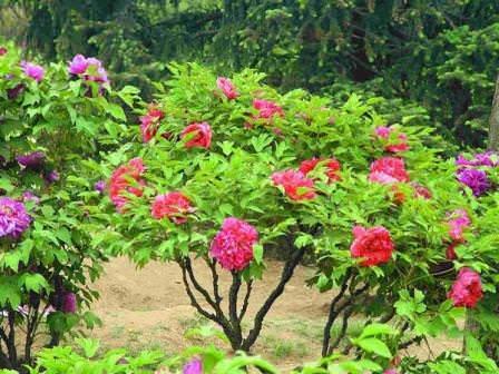 Удобрения для разных видов растений рекомендуется использовать соответствующие