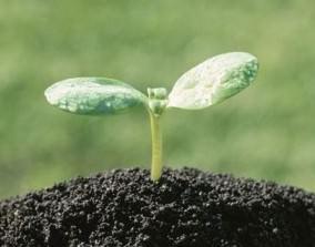 Плодородие почвы – основной фактор, влияющий на рост и развитие растений
