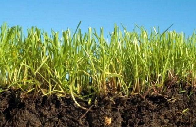 Если почва не дает достаточного количества питательных веществ, хорошего урожая не будет