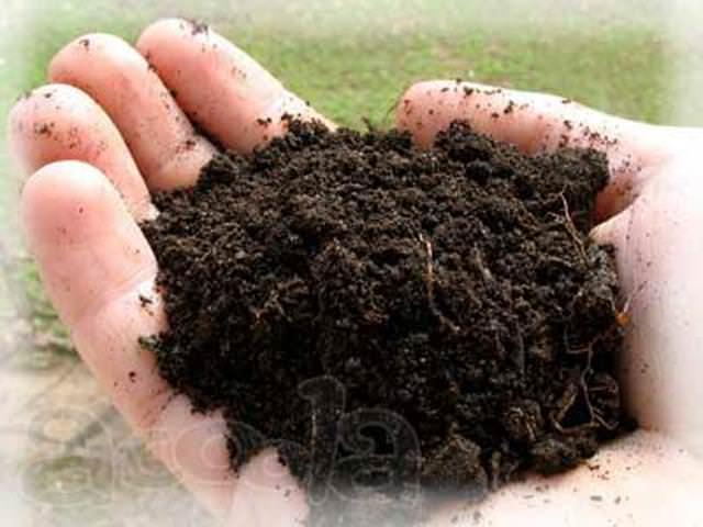 Восстановление плодородия почвы – важный вопрос, так как при снижении плодородия растения не только не растут так, как бы хотелось, но и подвергаются появлению различных болезней