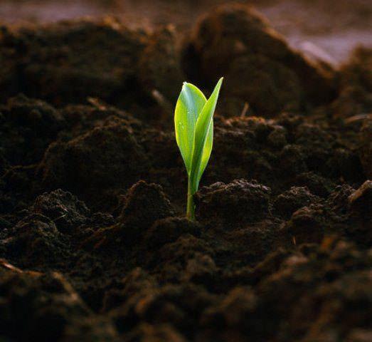 Повышение плодородия почвы – актуальный вопрос по причине того, что часто огородники сами делают грунт бедным