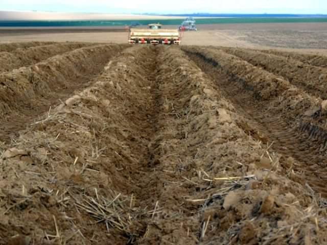 Оценка плодородия почв производится исходя из того, какие растения на ней произрастают