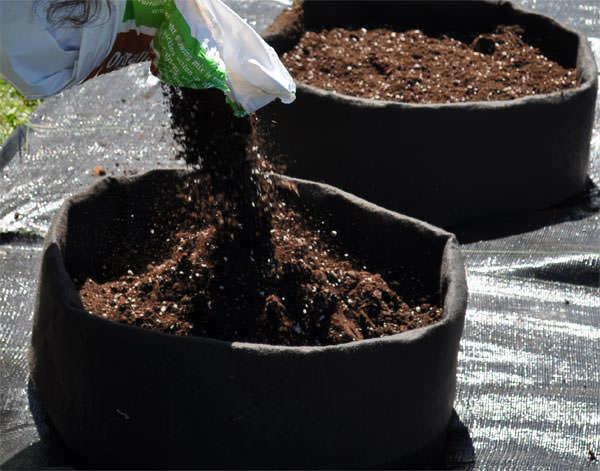 Идеальным составом для картошки в мешках будет перегнойная почва с добавлением форсфорных и калийных удобрений