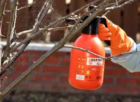 Подготовка плодового сада к зиме: осеннее опрыскивание специальными составами