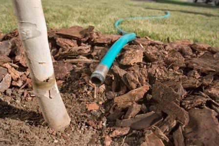 Осенний полив сада для зарядки деревьев влагой: правила, особенности, нормы