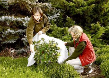 Как правильно укрывать садовые растения на зимний период?