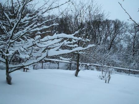 Деревья зимой или как подготовить плодовый сад к зимовке