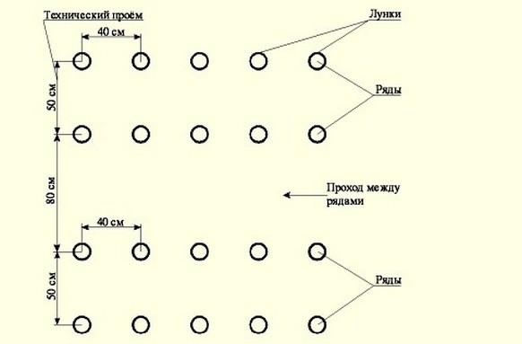 Высаживать огурцы «Зятек f1» следует согласно схеме посадки