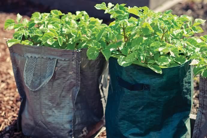 Сразу после посева необходимо разместить мешки в хорошо освещенном месте