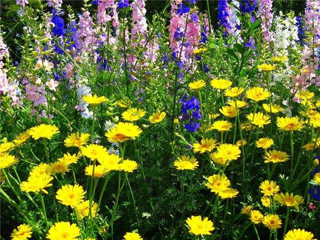 Использование многолетних цветов имеет ряд несомненных преимуществ