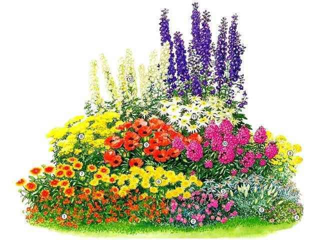 Если вы запланировали организовать клумбу непрерывного цветения, то обязательно используйте ирисы бородатые и люпин