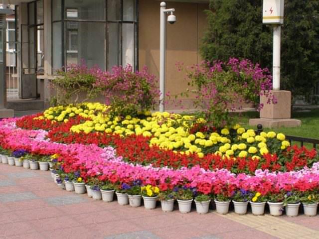 Прежде чем организовать простую клумбу, следует тщательно спланировать, что и как высадить, в каком порядке и цветовой гамме