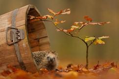 Многие виды культур можно посеять осенью