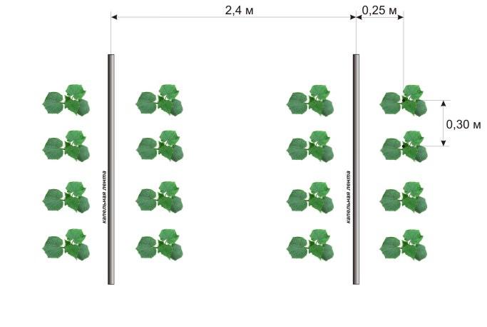 Посадка огурцов в теплицу производится в мае