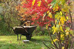 Каждому дачнику хочется иметь возле дома красивый и здоровый сад