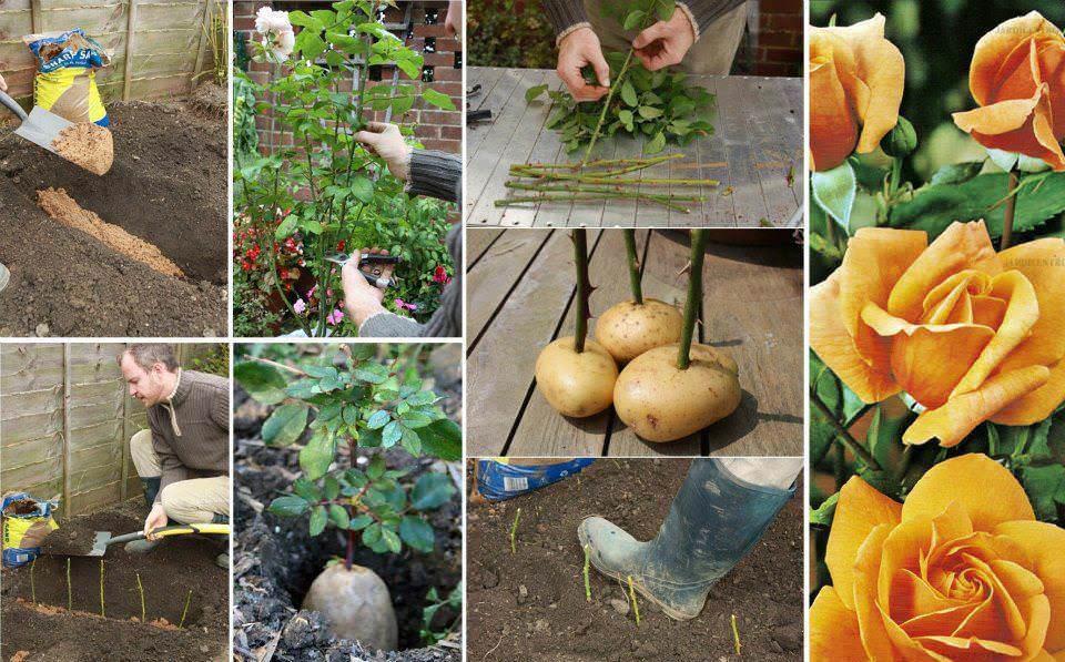 Как размножить садовые цветы самостоятельно