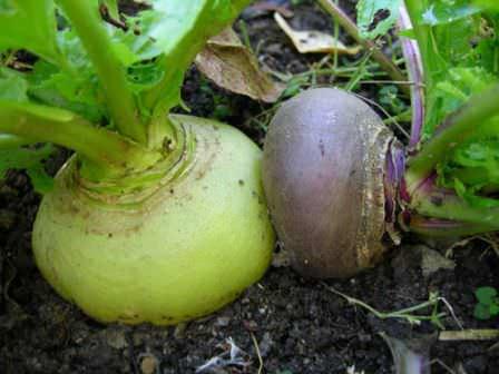 Важно не только обрабатывать почву, но и своевременно вносить специальные удобрения