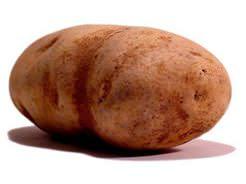 Картофель «Лапоть» – картофельный чемпион