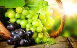 Виноград – растение, причисляемое к семейству Виноградовые