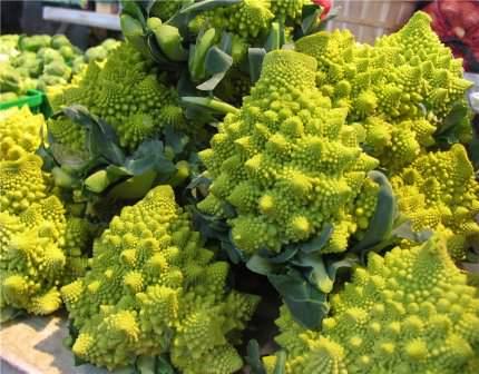 Выращивание капусты – не такое уж сложное дело. Главное – следить за влажностью и температурой. Не допускать сильной жары или затяжных холодов