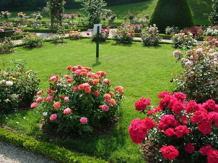 Изучая нюансы правильного ухода за розами, вы подбираетесь все ближе к возможности посадить и вырастить на даче розы, которые не только удивят вас, но и вызовут чувство зависти у соседей