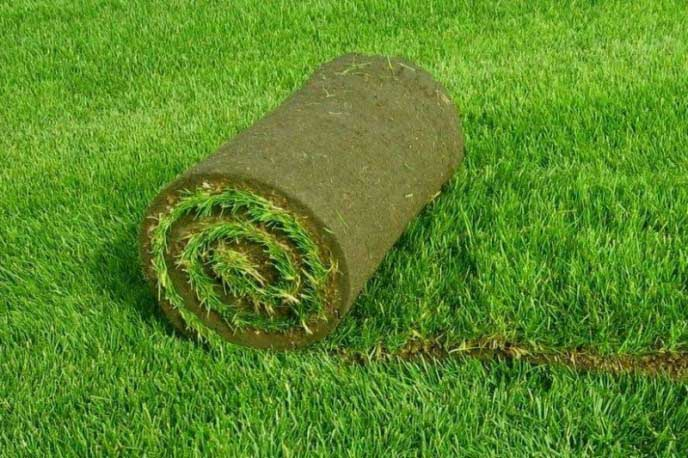 Перед тем как выбрать вариант оформления газона, следует определиться с его функцией