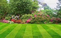 Все виды газонов способны украсить ваш участок