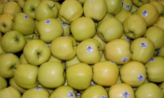 Правильное хранение плодов «Голден Делишес» позволяет продлить период использования свежих яблок до весны следующего года