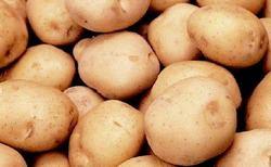 Картофель «Сагитта» хорошо зарекомендовал себя в нашей стране