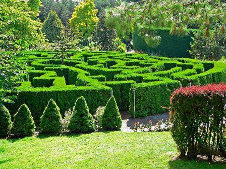 Растения, формирующие изгородь, определяют размеры лабиринта