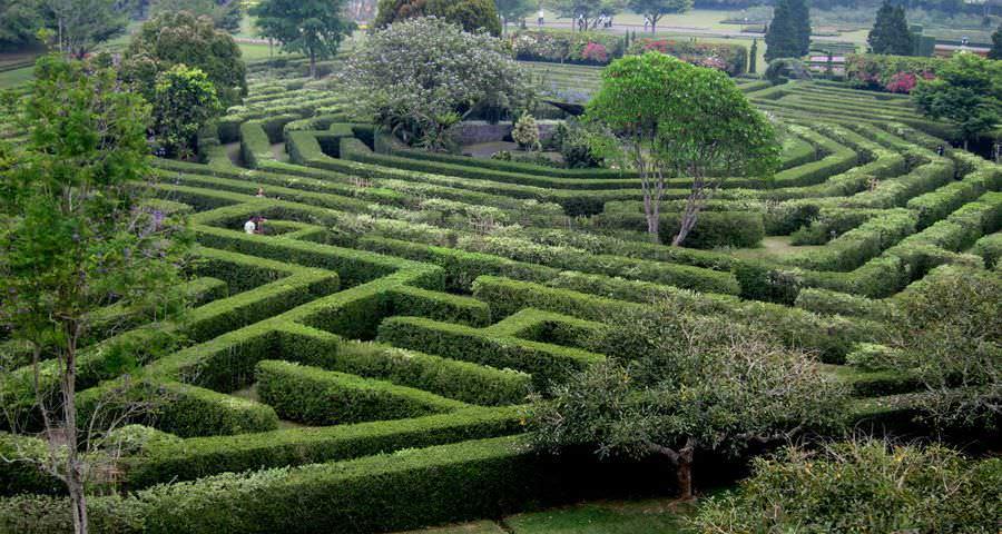 Если размеры участка позволяют, то вполне можно создать садовый лабиринт