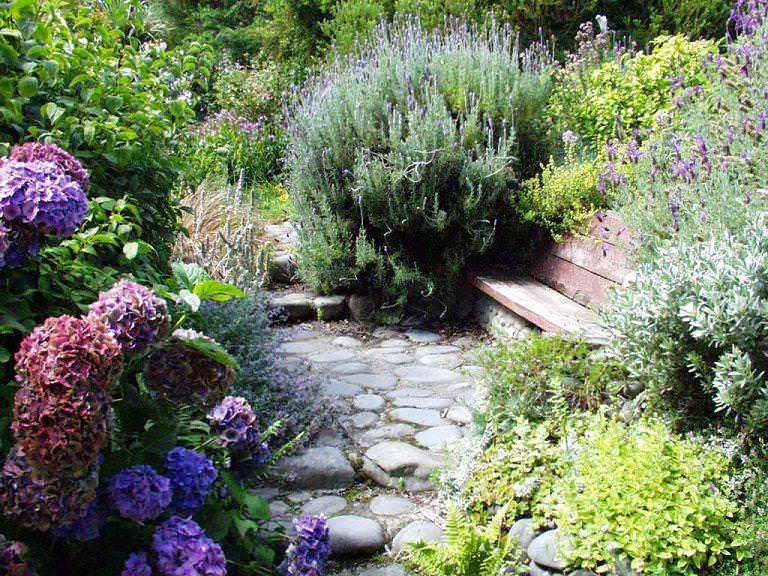 Конечно, растения южных широт плохо переносят наши холода, но к счастью, главными элементами средиземноморского сада являются горшечные и кадочные растения