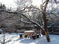 Зимовка сада
