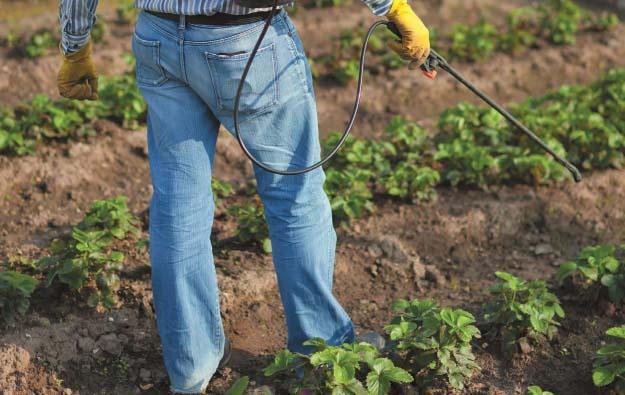 Профилактика – очень важный момент при выращивании клубники на собственном участке